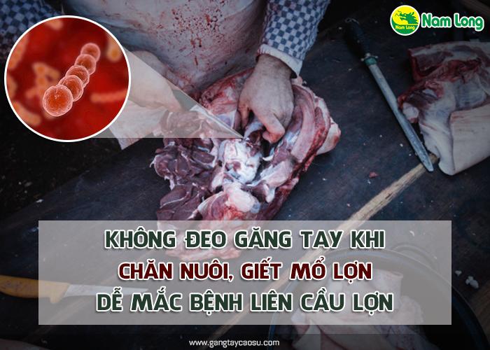 Không đeo găng tay khi chăn nuôi, giết mổ lợn dễ mắc bệnh liên cầu lợn-1 (1)