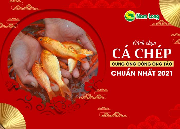 cach-chon-ca-chep-cung-ong-cong-ong-tao